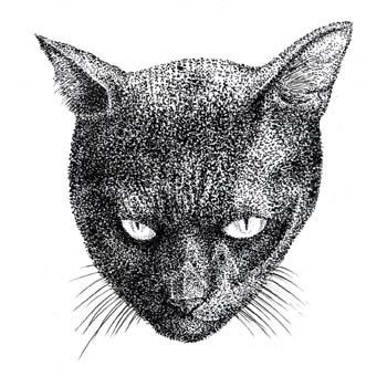 黒猫[1]s.jpg